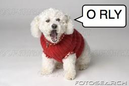 sweater dog orly
